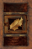 Dried Holly Leaf Photographic Print by Den Reader
