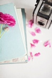 Pink Flower with Books and Camera Photographic Print by Susannah Tucker