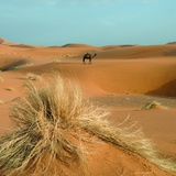 Camel in Sahara Desert Photographic Print by Steven Boone