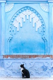 Black Cat and Blue Wall Photographic Print by Steven Boone