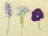Puple and Blue Flowers Photographic Print by Elizabeth Urqhurt
