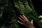 Hand on Moss Photographic Print by Kimberley Ross