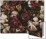 Dried Flowers Prints by Leslie O'Dell Ann