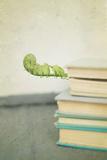 Antique Books with Leaf Photographic Print by Elizabeth Urqhurt