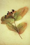 Dried Plant Fotografisk trykk av Den Reader