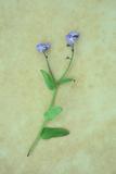 Single Flower Fotografisk trykk av Den Reader