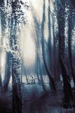 Mia Friedrich - Woodland in Winter - Fotografik Baskı