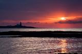 Coquet Island Sunrise Photographic Print by Mark Sunderland