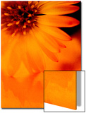 Burnt Orange - Aster Textured Affiche par Catherine Hoggins