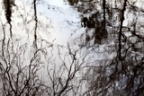 Reflections of Trees in Water Photographic Print by Mark Sunderland