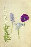 Blue and Purple Flowers Photographic Print by Elizabeth Urqhurt