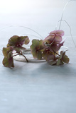 By the Wire - Still Life Image of Hydrangea Petals and Delicate Wire Photographic Print by Catherine Hoggins