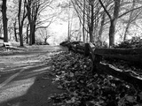 Road with Leaves on Ground Photographic Print by Sharon Wish