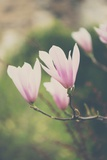 Pink Magnolia Flower Photographic Print by Laura Evans