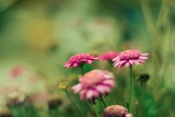 Pink Flowers Outdoors Photographic Print by Carolina Hernandez