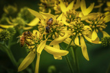 Bees on Flowers Photographic Print by Stephen Arens