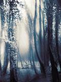 Woodland in Winter Metalltrykk av Mia Friedrich
