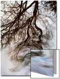 Reflections of Trees in Water Print by Mark Sunderland