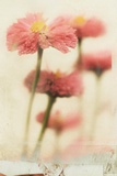 Close Up of Flowers Fotografie-Druck von Mia Friedrich