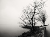 Bare Trees on a Lake Side Bank Photographic Print by Sharon Wish