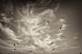 Seagulls in the Air Photographic Print by Tim Kahane