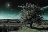 A Tree under a Night Sky Photographic Print by Mark Gemmell