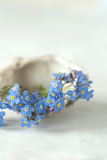 Forget Me Not Blue Flowers Photographic Print by Catherine Hoggins