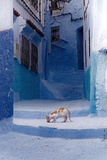 Cat in Alleyway in Morocco Photographic Print by Steven Boone