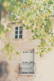 French Building with Balcony and Trees Photographic Print by Laura Evans