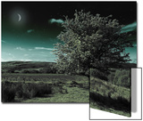 A Tree under a Night Sky Prints by Mark Gemmell