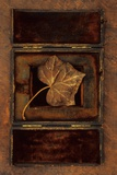 Dried Leaf Photographic Print by Den Reader