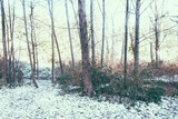 Winter Woodland Scene Photographic Print by Sharon Wish
