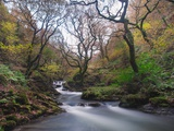 Stream Flowing Through Woodland in England Photographic Print by Clive Nolan