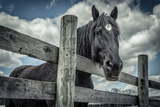 Old Black Horse Photographic Print by Stephen Arens