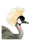 Watercolor Crested Crane Giclee Print by Naomi McCavitt