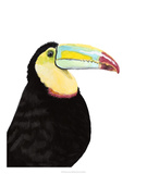 Watercolor Toucan Giclee Print by Naomi McCavitt