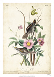 Seaside Finch Giclee Print by John Audubon