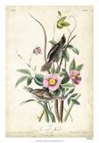 Seaside Finch Giclee Print by John Audubon