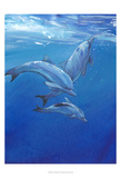 Under Sea Dolphins Prints by Tim