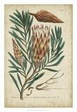 Weinmann Foliage & Fruit III Giclee Print by  Weinmann
