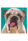 Dlynn's Dogs - Bosco Prints by Dlynn Roll