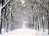Way Through Forest in Winter Metal Print by Guenther Essbach