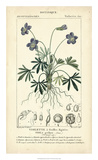 Botanique Study in Lavender IV Giclee Print by  Turpin