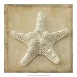 Sepia Shell I Prints by Judy Stalus
