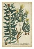 Weinmann Foliage & Fruit IV Giclee Print by  Weinmann