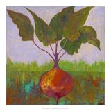 Veggie Garden IV Prints by Mehmet Altug
