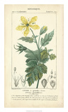 Botanique Study in Yellow IV Giclee Print by  Turpin