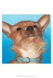 Dlynn's Dogs - Gratitude Prints by Dlynn Roll