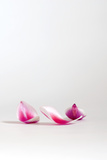Delicate Petals Photographic Print by Catherine Hoggins