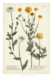 Saffron Garden IV Giclee Print by  Weinmann